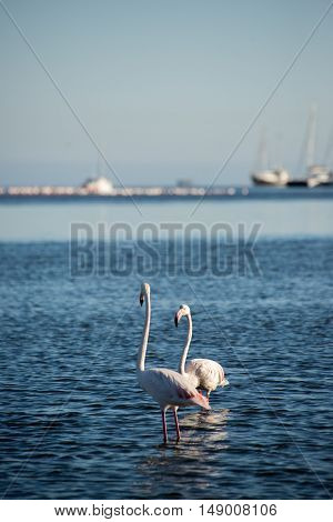 Two Flamingos In The Bay