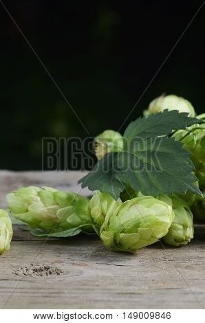 Green Hop Cones on a old wooden background. Fresh herbal ingredient for beer production