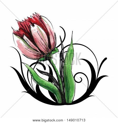 beautiful red tulip with curls for decoration
