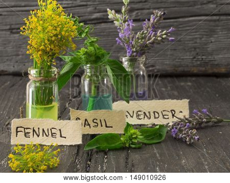 fennel blossom, basil and lavender, spicy herbs