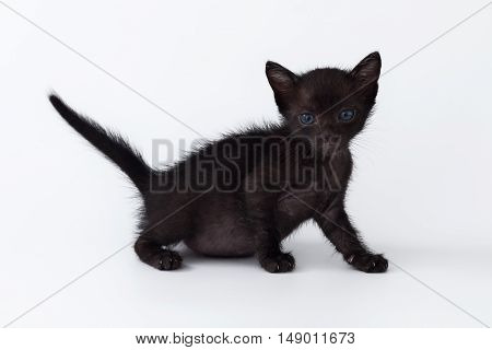 Cute Kitty Balck Cat Looking On White Background