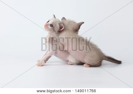Cute Kitty Cat Relax On White Background