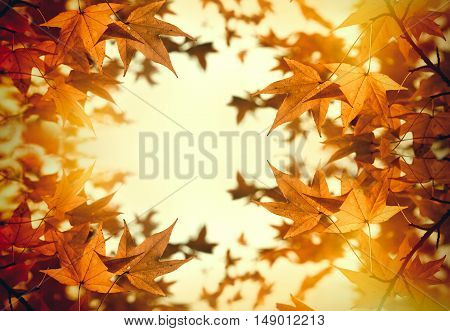 Autumn foliage - leaves  lit by sunlight (beautiful nature in autumn)