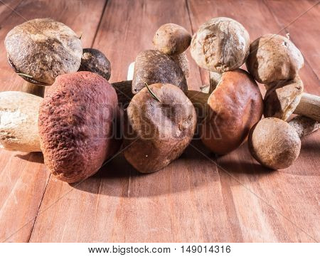 Forest mushrooms on wooden background. Autumn background