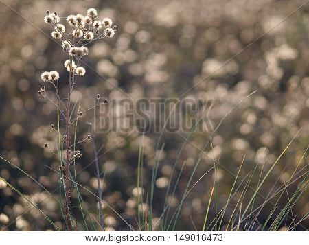 The evening backlight adds a romantic atmosphere to this grass in the dunes