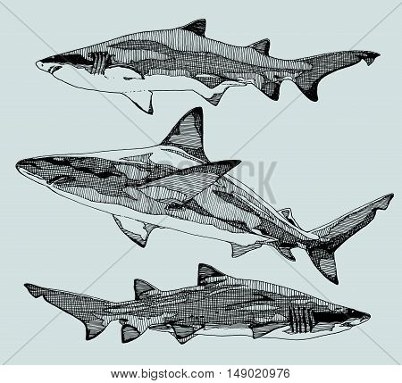 Hand drawn sharks. Sketchy style. vector illustration.