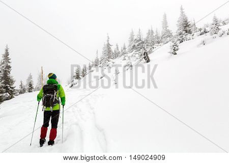 Winter trek in white woods. Man hiking trekking in winter white forest. Travel recreation fitness and healthy lifestyle in beautiful snowy nature. Motivation and inspirational winter landscape.