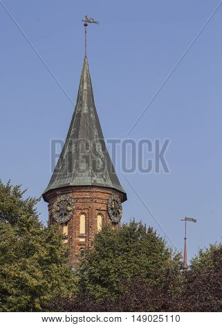 Tower Konigsberg Cathedral and Jasmine. Symbol of Kaliningrad,