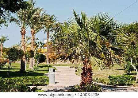 Different Trees And Palms On Garden Of Resort