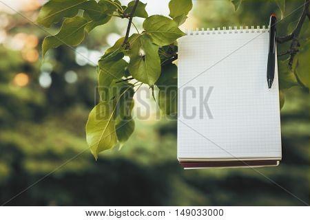 Empty Notepad On Green Tree Branch