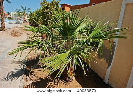 Small Palm Tree By The Side Of A Resort