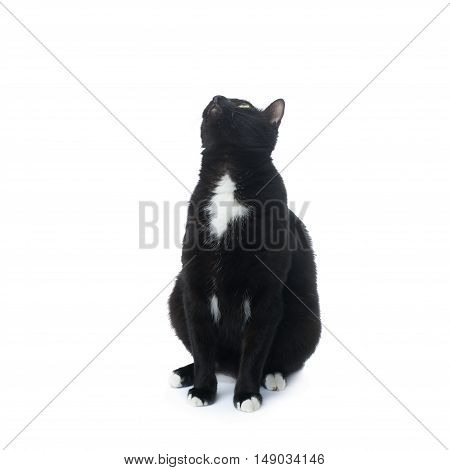 Sitting on the floor black cat isolated over the white background