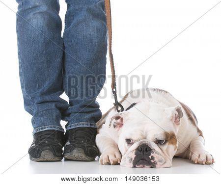 dog working on a down on white background