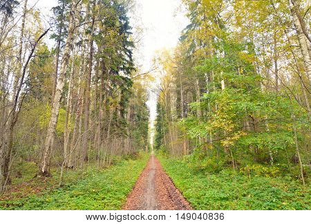 Forest at early autumn Russia. Reserve the northern coast of the Neva Bay.