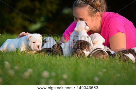 woman playing with litter of english bulldog puppies outside