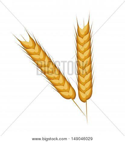 wheat ears barley desing isolated vector illustration eps 10