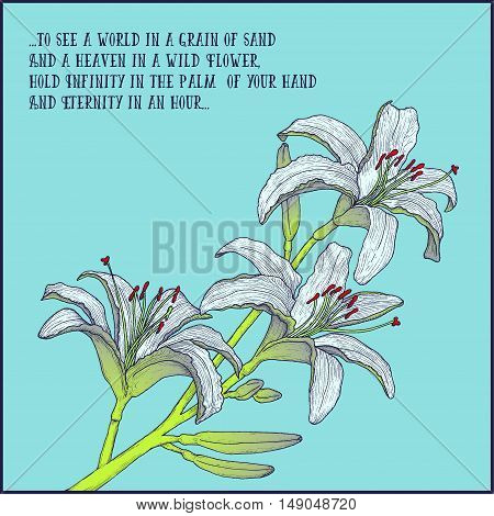 Hand drawn background with white lily branch for greeting cards, invitation etc. Vector illustration