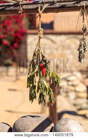 Hot red pepper dries on a garden drying rack on a farm