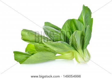 fresh baby bok choy (Chinese cabbage) on white background