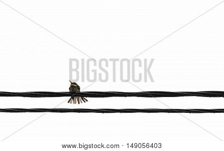 Birds sit on the wires on a white background.