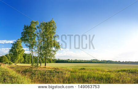 rural summer landscape. panorama with sunrise and field forest with blue sky