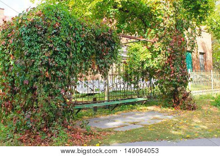 Old bench in autumn park decorated with wild grapes
