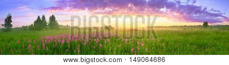 rural summer landscape with sunrise a blossoming meadow and fog. panorama
