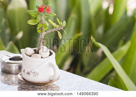background nature flowers in ashtray and vase on table