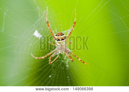 background nature animal is spider spin a web