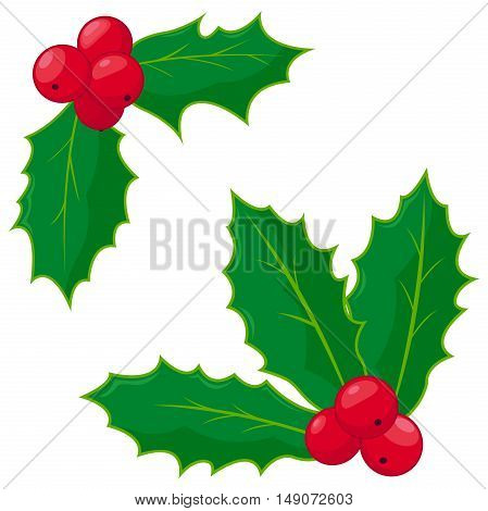Christmas decoration holly berry sprigs vector illustration