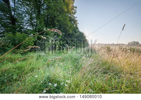 Cobweb On Grass