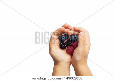 Raspberries, blackberries and blueberries in the children's hands isolated on white background. The concept of summer berry crops, organic food, vitamins
