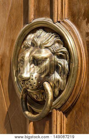 cast brass lion door knob on a wooden door