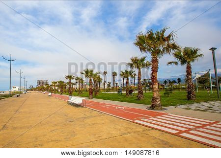 Empty embankment in Batumi a jogging track bicycle track. along the track grows palm trees