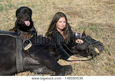 young girl and rottweiler with a black stallion in a field