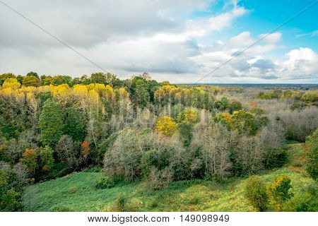 Aerial view of autumn forest with warm sun light illuminating gold foliage. A top view of colourful trees at fall