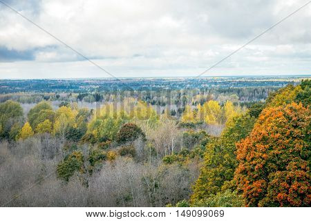 Aerial view of golden autumn forest nature. A top view of colourful trees at fall