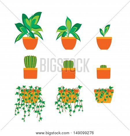 Green Plants in Pot for Home or Office. Flat Design. Vector illustration