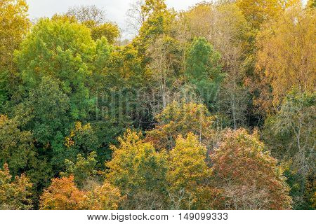 Vibrant colors of autumn forest with warm sun light illuminating gold foliage. Colourful trees nature at fall