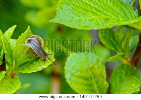Mollusk In A Garden With Green Plants