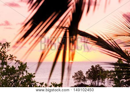 Palm Paradise Sunrise Divine