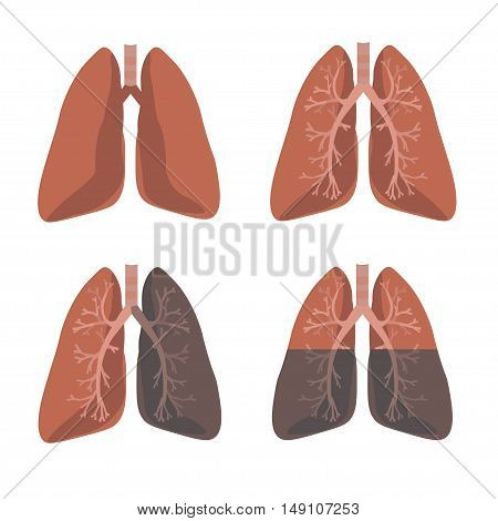 Human Lung Anatomy Set. Flat Design Style. Vector illustration