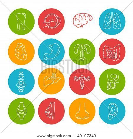 Human Organs Thin Lines Icon Set in Color Circles. Vector illustration