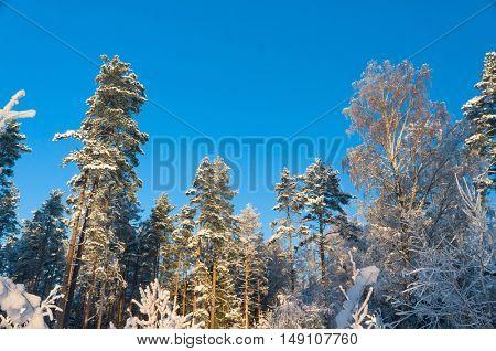 Frosty Glow Wintry Landscape