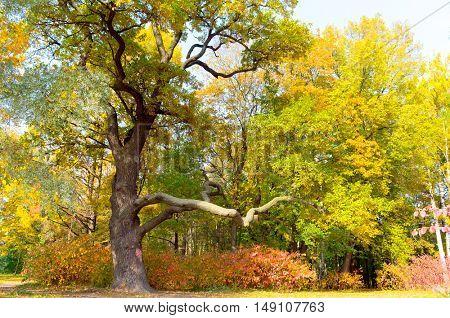 Woods Landscape Forest View