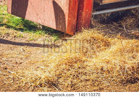 Golden Hay At A Stable