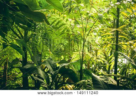Tropical Vegetation With Green Plants And Trees