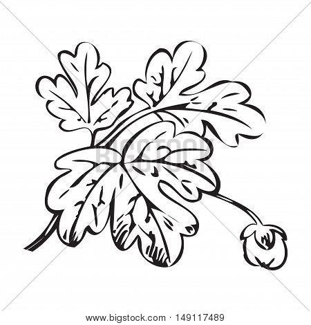 Floral bush retro black on white background vector hand drawn decorative flower vintage contour closeup branch with bud print design
