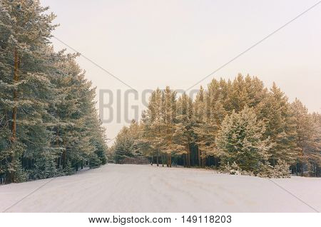 Wintry Landscape Scenery With Flat County And Woods, Snow Landscape Background For Retro Christmas Card, Winter Trees In Wonderland. Winter Scene, Christmas, New Year Background, Winter's Tale
