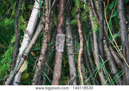 many wooden sticks are in the woods